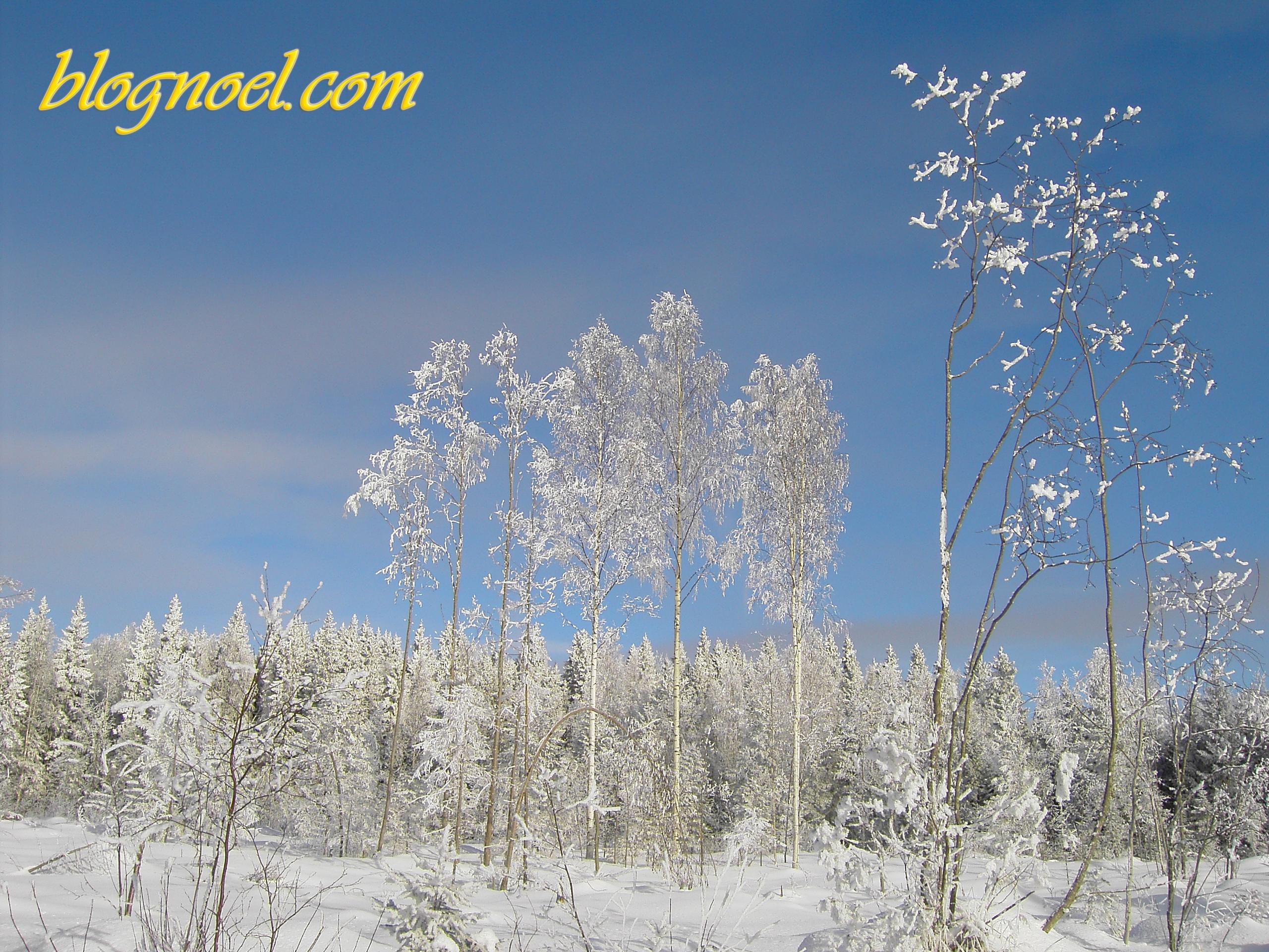 Forêt givrée - Résolution: 2560×1920 pixels