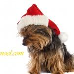 Chien de  Noël - Résolution: 1600×1140 pixels