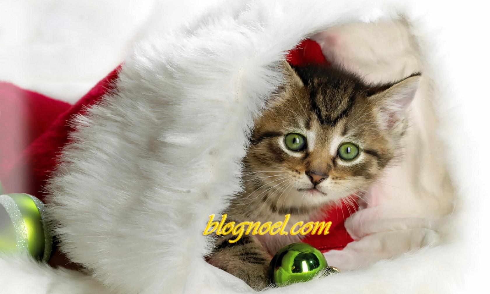 Petit chat noel f te de no l images musique et vid o - Image de petit chat ...